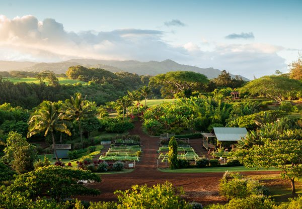 The Farm at Kukuiula