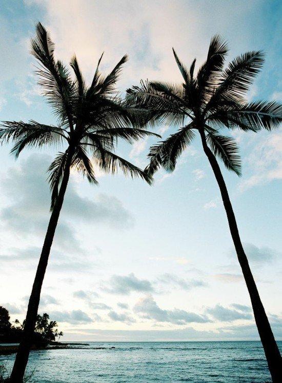 Palm Trees on Kauai