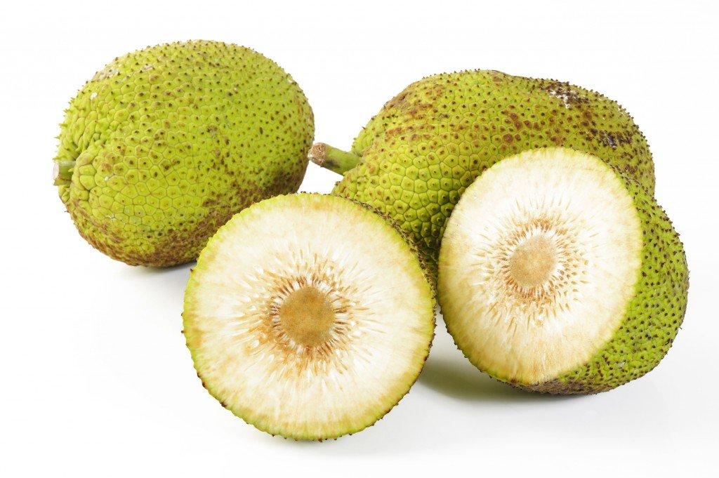 breadfruit kukui'ula kauai