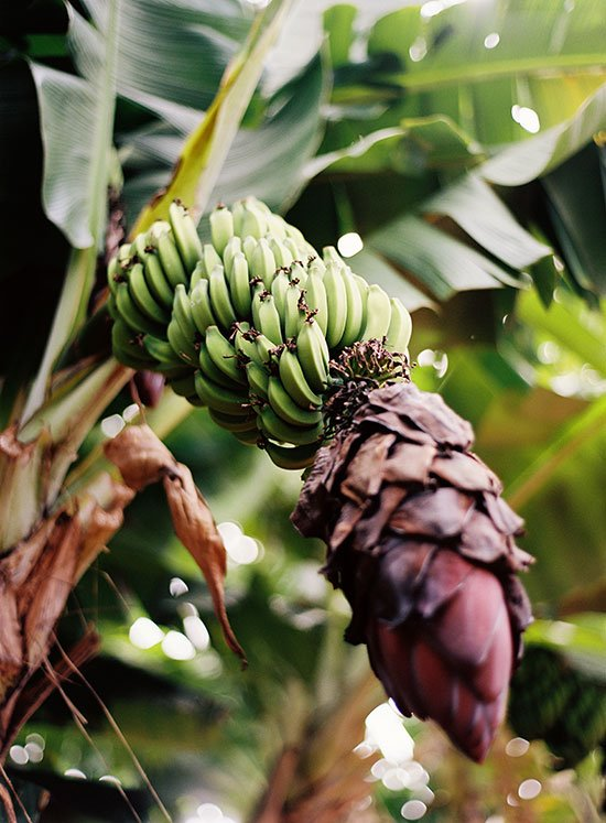 the farm at kukuiula - bananas