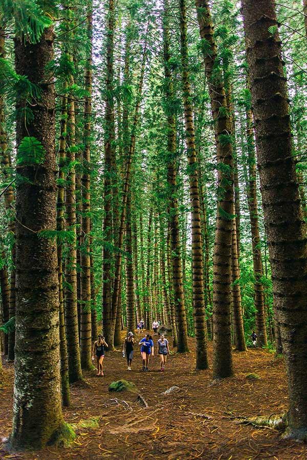 Hiking through the forest of Sleeping giant hike on Kauai