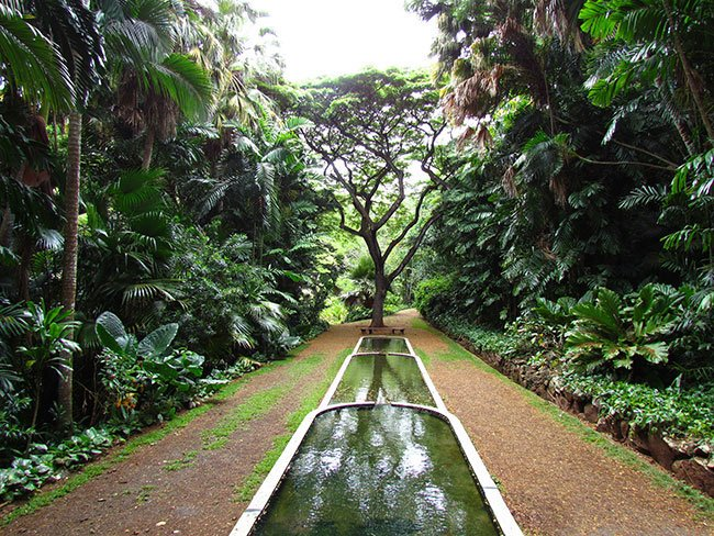 Kauai Botanical Gardens Poconot Garden