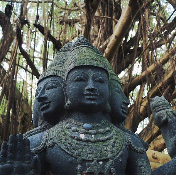 Banyan Tree Meditation