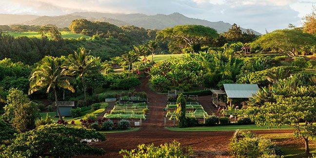 farm-kauai